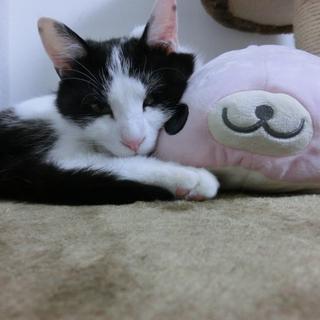 ハチワレ美猫☆
