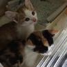 兄妹猫です。よろしくお願いします