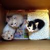 可愛い子猫3匹の里親