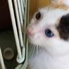 白の多い、きれいな三毛 サムネイル3