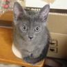 大人猫も人間も大好き♪ 兄弟希望♪  【名古屋】