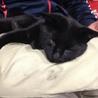 甘えん坊の黒猫☆初心者でも飼いやすい猫です☆