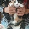 田んぼに捨てられてた子猫ラブリーちゃん サムネイル2