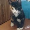 田んぼに捨てられてた子猫ラブリーちゃん サムネイル3