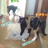 田んぼに捨てられてた子猫ラブリーちゃん サムネイル7