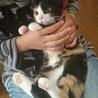 田んぼに捨てられてた子猫ラブリーちゃん サムネイル6