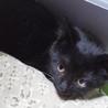 黒猫ちゃん生後2ヶ月ぐらいです。