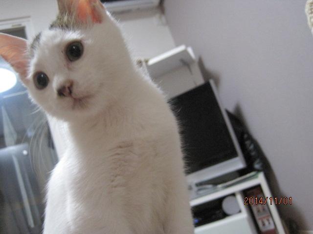 「人懐っこい子猫2匹 生後...」三重県 - 猫の里親募集(53339)