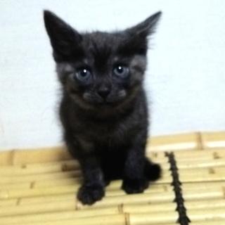 おてもやん黒トラ♀ お見合いにより里親様決定!