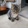 迷い猫 甘えん坊の女の子