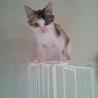 三毛のかわいい子猫