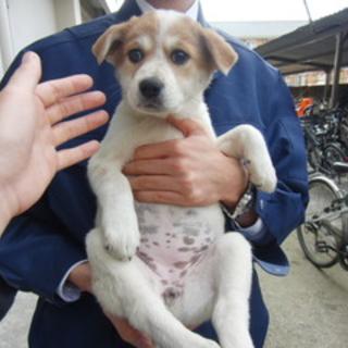 期限迫った仔犬たち(三原警察署にて収容中)