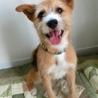 日本初プログラム卒業犬!「ロン」MIX推定3・4歳