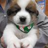 かわいいコロコロ子犬