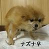 ナズナ(wan life)