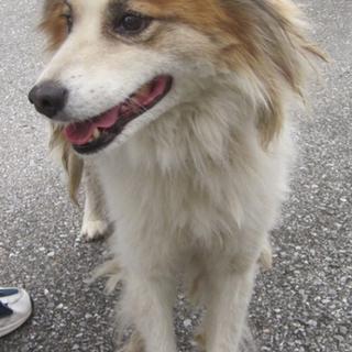 飼い主危篤でセンターに殺処分持ち込みの15才の犬