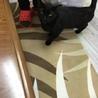 黒猫なっちゃん☆男の子☆4歳手術済