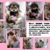 ◆倉敷ブランドの下津井仔犬◆