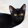かぎしっぽの黒猫ちゃんです!