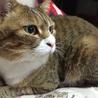 猫 ♀ 6歳去勢済みです。