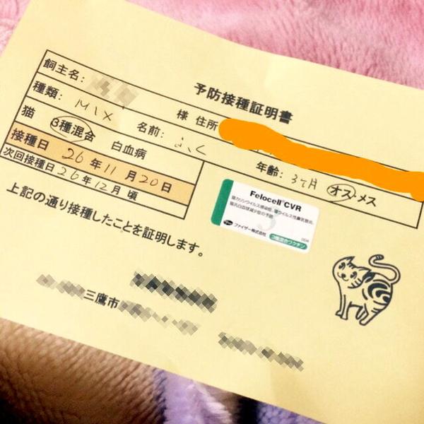 カワイイ盛りの3ヶ月♪キ   」東京都 - 猫の里親募集(55108