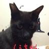 黒猫のくぅちゃん 優しい男の子