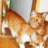 子猫のいっちゃん♂ 人に馴れています サムネイル2