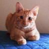 子猫のいっちゃん♂ 人に馴れています サムネイル3