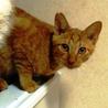 子猫のえいちゃん♂ 人に馴れています サムネイル3