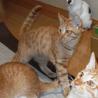 子猫のえいちゃん♂ 人に馴れています サムネイル2