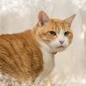 穏やかでのんびりしたでっかい猫さん サムネイル2