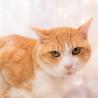 穏やかでのんびりしたでっかい猫さん サムネイル3