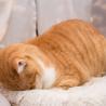 穏やかでのんびりしたでっかい猫さん サムネイル5