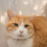 穏やかでのんびりしたでっかい猫さん サムネイル4