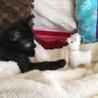 黒い子猫(視力障害あり)