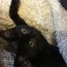 黒猫♥noelノエル♥女の子手術済 サムネイル2