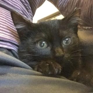 黒猫♥noelノエル♥女の子手術済