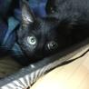黒猫♥noelノエル♥女の子手術済 サムネイル3