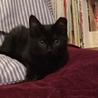 黒猫♥noelノエル♥女の子手術済 サムネイル4