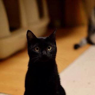 センターレスキュー黒猫美人