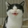 笑顔がかわいい甘えん坊。半長毛ふわふわ洋猫MIX。