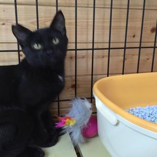 黒猫⁂ゆう君⁂3か月半 男の子手術済