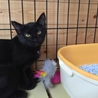 黒猫⁂ゆう君⁂3か月半 男の子手術済 サムネイル3