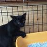 黒猫⁂ゆう君⁂3か月半 男の子手術済 サムネイル2