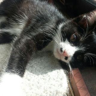ヒゲがかわいい、ブサカワ子猫!