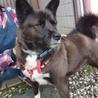 多頭飼育現場の愛情不足犬カンナ サムネイル5