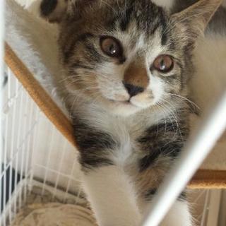 陽気で明るい子猫です!