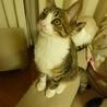 生後推定4~5ヶ月の子猫【5/5】
