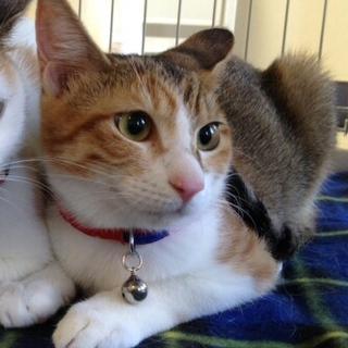 かわいい三毛子猫ちゃんです!