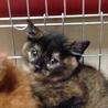 サビ猫3ヶ月